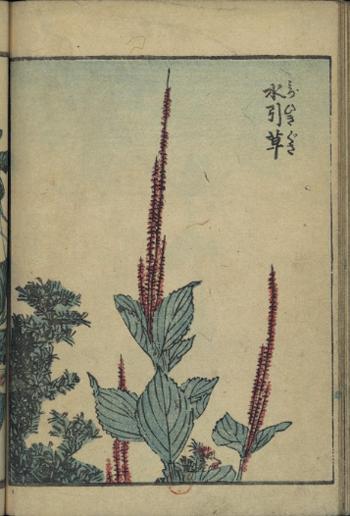 Hokusai5