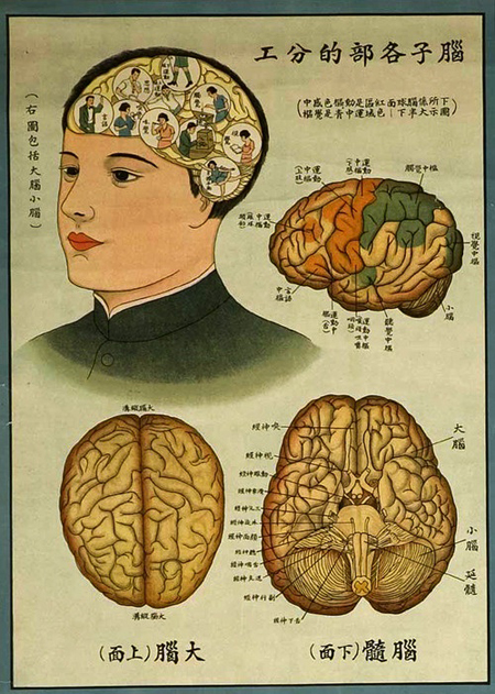 a paper on phrenology