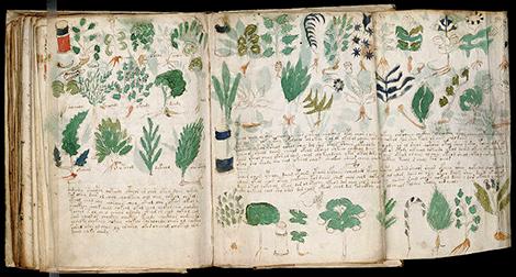 800px-Voynich_Manuscript_178